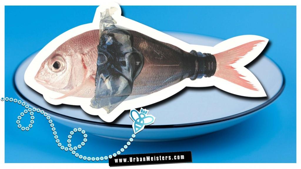 seafood marine pollution
